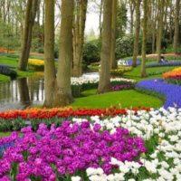 Jasa Taman Rumah Siap Memperindah Taman dengan Konsep Menarik