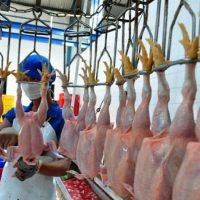 Analisa Usaha Rumah Potong Ayam dan Peluang Bisnisnya